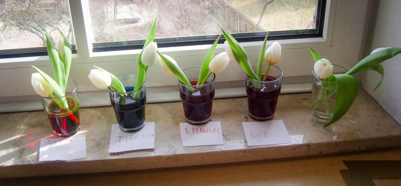 Blumen auf Fensterbank