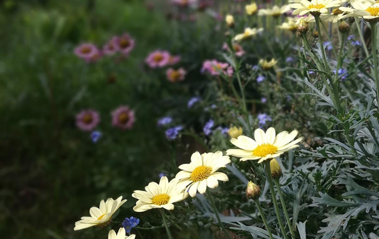 Blumen Hirschgarten Zwerge2