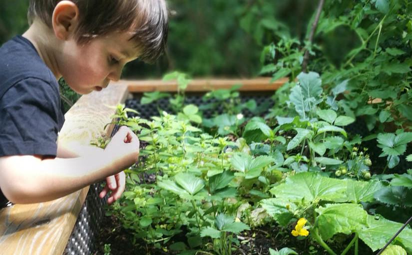 Kleine Gärtner